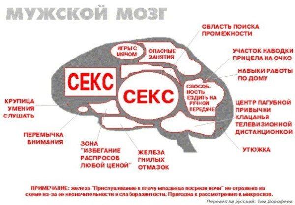 астливого человека, то мозг командует: поднять настроение!